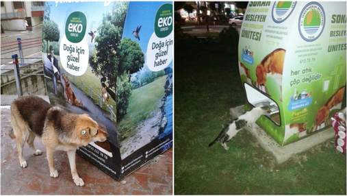 Корм в обмен на бутылку: как в Стамбуле заботятся о бездомных животных