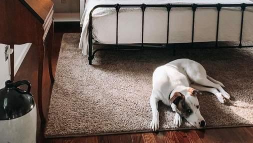 Собачка проверяет сон своей семьи, пока она спит: самое милое видео дня