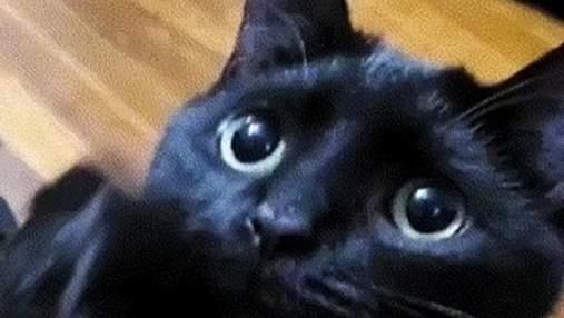 """Невозможно отказать: кот с пронзительным взглядом выпрашивает лакомство, как герой """"Шрека"""""""