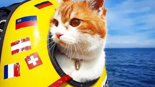 Український кіт-мандрівник Кока: 25 тисяч кілометрів у небі і заблокований інстаграм