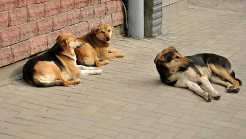 Стерилізація тварин: ветеринар розвінчує популярні міфи
