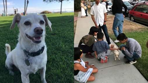 Хитрый четвероногий: собака придумала, как получать больше любви от прохожих
