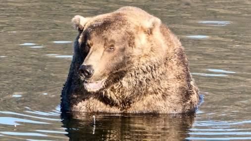 На Аляске выбрали самого толстого медведя: у него очень нетипичная рыбалка