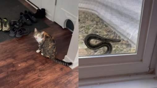 Кошка смогла спасти змею из ловушки: какие действия четырехлапой помогли пресмыкающемуся