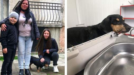 Нашли собаку через полтора года: детали трогательной истории из Черновцов