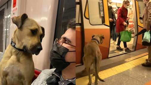 Лучший друг пассажиров: в Стамбуле пес ежедневно самостоятельно путешествует на метро и паромах