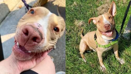 Хотела объятий и любви: волонтеры спасли собаку, которую бросили прежние владельцы