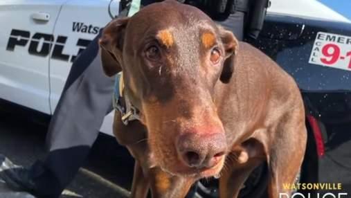 Плакал от радости: мужчине вернули его любимого пса – трогательное видео