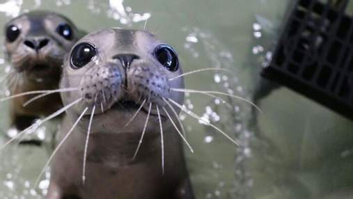 Куда уж милее: трогательная подборка фото новорожденных животных, которые заставят вас растаять