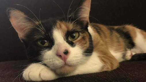 Кошка спасла хозяев от опасной утечки газа: какое поведение животного помогло семье