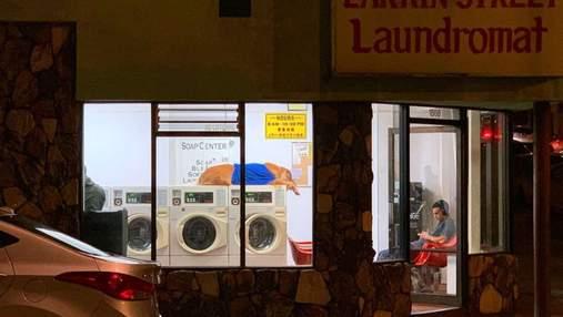 Пес обожает лежать на стиральных машинах и стал знаменитостью