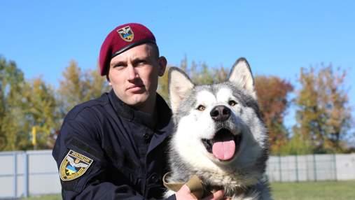 Полицейские из Винницы сделали яркую фотосессию с собаками в приюте: невероятные фото