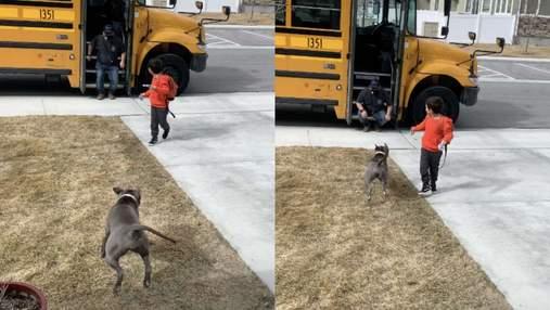 Питбуль ежедневно благодарит водителя школьного автобуса: какой трогательный метод использует