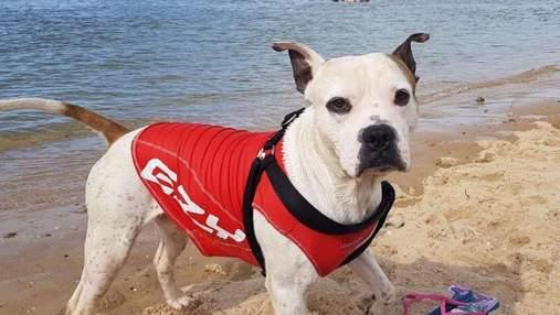Позволил ухватиться за жилет: пес спас мальчика, что не справился с волнами океана