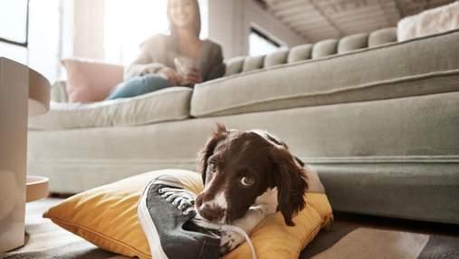 Гризе взуття та псує речі: як правильно та без шкоди відучити собаку від шкідливої звички
