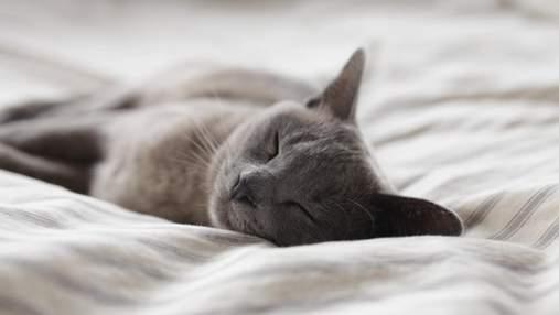 8 повсякденних речей, які люблять усі коти