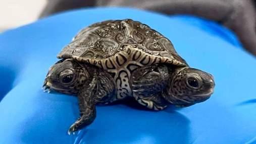 Двуглавая черепаха удивляет ученых: фото редкого создания