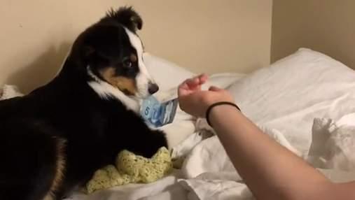 Собачке дали 5 долларов, чтобы она перестала лаять, но что-то пошло не так