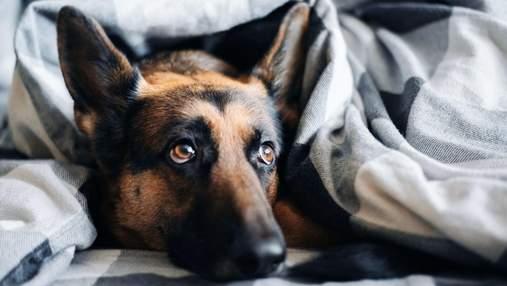 Скучают ли собаки, когда остаются одни дома: интересное объяснение