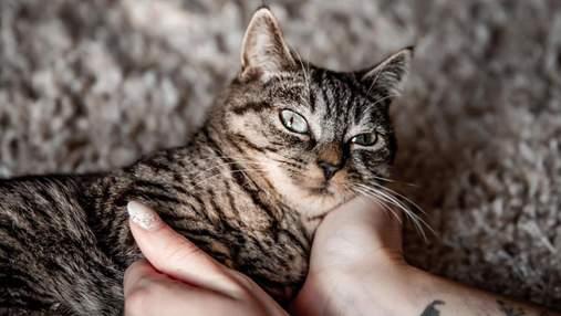 Деньги для кота с неизлечимой патологией: как люди решили помочь четвероногому