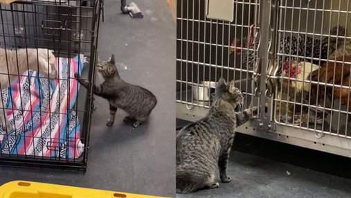 Кошка работает в ветеринарной клинике: какие обязанности у четырехлапой
