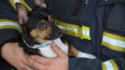 Надышался дымом: пожарные спасли собаку из охваченной огнем квартиры