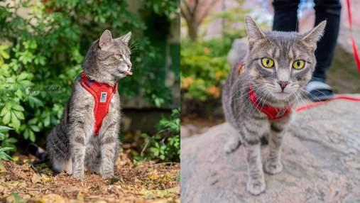 Ездит автобусами и изучает Торонто: как кот путешествует вместе с хозяйкой – яркие фото