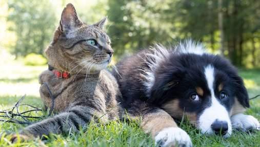 Кто сильнее привязан к хозяину – коты или собаки: объясняют ученые