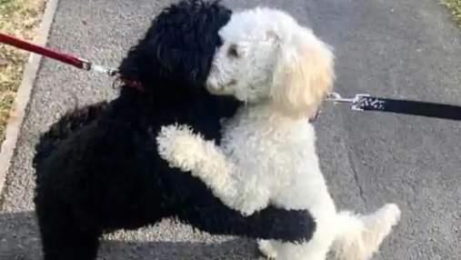 Разлученные в детстве щенки узнали друг друга после года разлуки: трогательное фото
