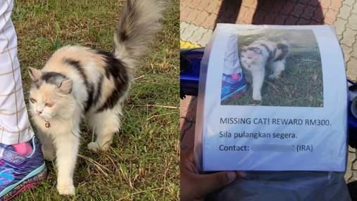 Видел только фото с объявления: как собака помогла найти потерянного кота