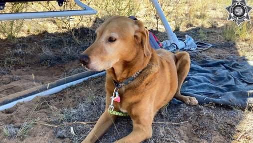 Собака смогла выжить в авиакатастрофе и вернуться в семью: детали истории