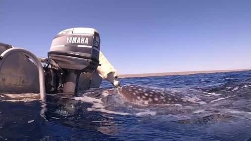 Как лабрадор поцеловал акулу: дайвер сняла невероятное видео