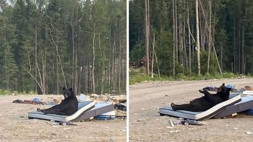 Медведь нашел на свалке матрас и хорошенько отдохнул: забавные фото