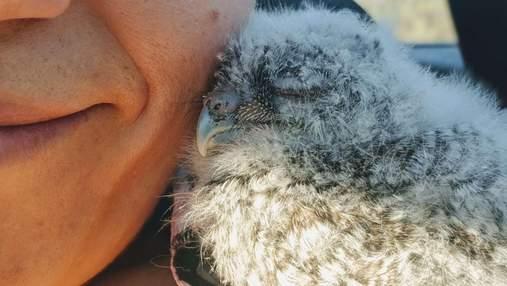 Вылез из коробки и притиснулся к щеке: женщина смогла спасти крошечного совенка