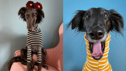 Платок на длинной шее или стильный гольф: хозяйка показывает впечатляющие наряды своей собаки