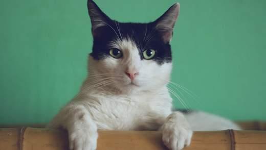 Сегодня празднуют День кота: подборка популярных инстаграм-котиков Украины и мира
