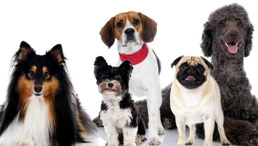 Какие собаки самые популярные в разных странах: карта
