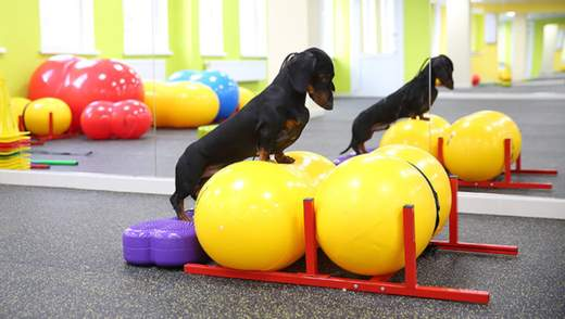 Хозяева собак фанатеют от этого тренда: что такое дог-фитнес и кому он нужен