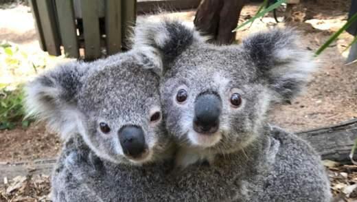От тюленей до коал: милые фото, где животные обнимаются, как люди