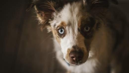 Чему обязательно нужно научить собаку: советы по дрессировке